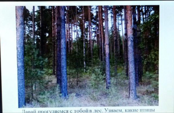 """Занятие для интеллекта """"звуки леса"""""""